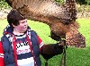 Adam Hynes flying Dingle when he visited again recently. He has been so many times that he almost knows more about birds than we do. It is very impressive, as is his handling of the hawks for such a young age.