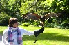 Carolyn Van Vleet flying Stoker on her recent Hawk Walk.