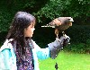 Kotone Kitajima flying Wexford on her recent Hawk Walk.