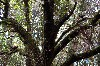 Spot the hawks in one of the fabulous old trees that we fly to!