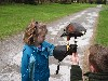 Juliana Taylor flying Milly with Jason on the Taylor familys recent Hawk Walk.
