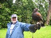 Mark Murphy flying Rua on his recent Hawk Walk.