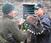 Joseph Clutterbuck with Eoin and Swift, just returned from their Hawk Walk.