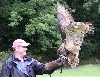 Jim Donnelly flying Dingle after his recent Hawk Walk with us.