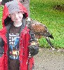 The Freeby family took a  Hawk Walk recently, where they flew Swift & Wilde.