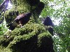 Milly & Fomhar on one of our favourite trees. Marilyn Olsen sent this great photo.