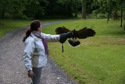 Thank you to Jeannine Horan for these excellent photos of her Hawk Walk with us on June 16th.