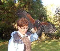 Barbara Hassler in action during her recent Hawk Walk.