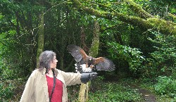 Amy Greer flew Rua & Burren with Mark Murphy on their recent Hawk Walk.