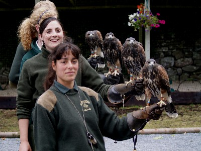 A group photo of the newly named baby Harris hawks:- Stoker, Joyce, Wilde & Swift!