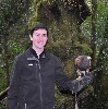 Brian Reynolds with Killary, flying him out & about in the woods during his Hawk Walk.