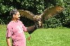 Art Murphy flying Dingle, our owl, as captured and sent in to us by JoAnn Murphy.