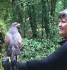 Here is Carryn Sullivan and Yoda in conversation with each other during their recent Hawk Walk. This was Yoda's first ever Hawk Walk at only 12 weeks old, he is still just a baby.
