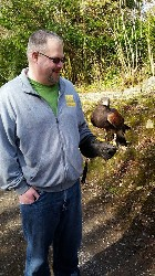 Chris Eichrodt flying Maya during his recent Hawk Walk with us.
