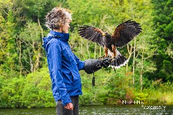 I love this photo that Noel Hilis sent us of Maeve Thornberry flying beautiful Hansel with us recently. We were delighted to welcome Maeve back after first flying hawks with us 10 years ago!