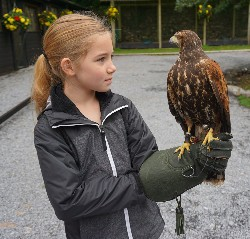 I love this photo of Rose Hathorn getting acquainted with Lima before setting off to fly her during her recent Hawk Walk here. Rose did a really great job of handling and flying Lima very well.