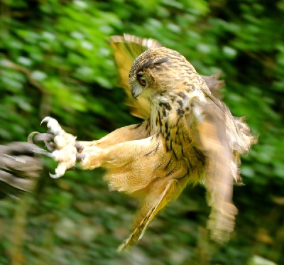 Wendy Hryniw somehow managed to capture this great photo of Dingle in flight, he looks really fast in this photo! I love how far forward he throws his feet before landing.