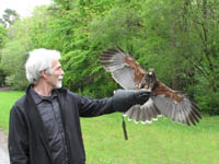 Ireland�s School of Falconry